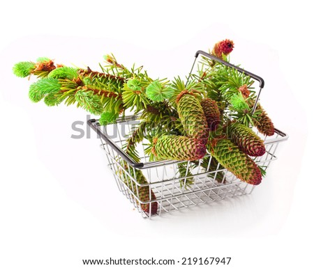 Brightly green prickly branches of a fir-tree in a shopping basket - stock photo