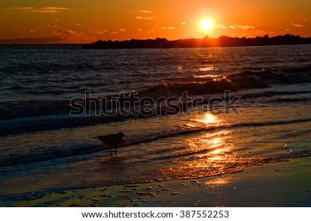 Brighton Beach - stock photo