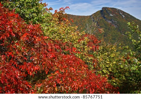 Brilliant Fall Color at Hawksbill Mountain, Linville Gorge Area of North Carolina Horizontal - stock photo
