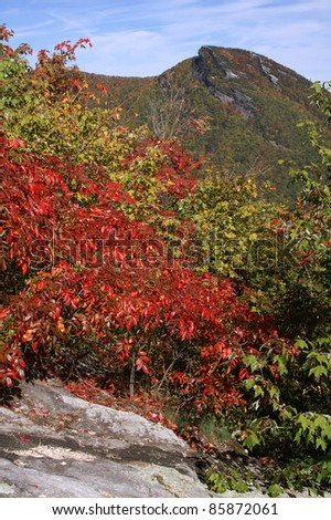 Brilliant Fall Color at Hawksbill Mountain, Linville Gorge Area of North Carolina Vertical - stock photo