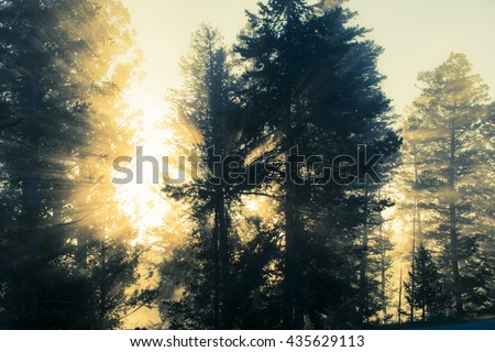 Brilliant morning sun rise rays beaming through silhouetted pine trees - stock photo