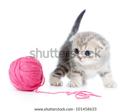 british baby cat playing red clew or ball on white - stock photo