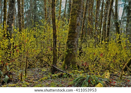 British columbia has the most beautiful tree and the forrest in the world and here is why. There are so many of them that creates their own land - stock photo