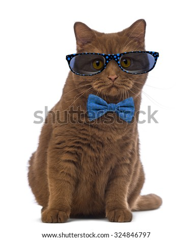 British Shorthair wearing glasses and a bow tie in front of white background - stock photo