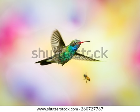 Broad Billed Hummingbird and Bee. Slight motion blur on this shot. Part of my new hummingbird art collection using different patterned material in the background to create a one of a kind image.  - stock photo
