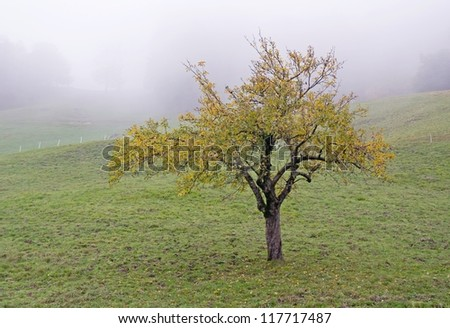 Broadleaved tree in a white autumn fog - stock photo