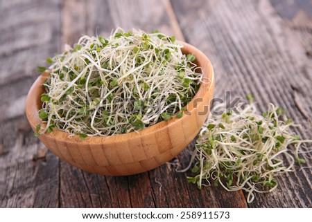 broccoli sprouts - stock photo