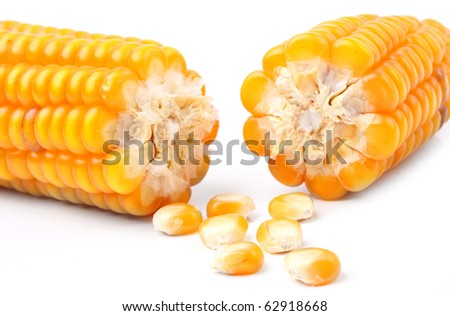 Broken corn on a white background. Close up with shallow DOF. - stock photo