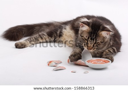 Broken dish and a cat - stock photo