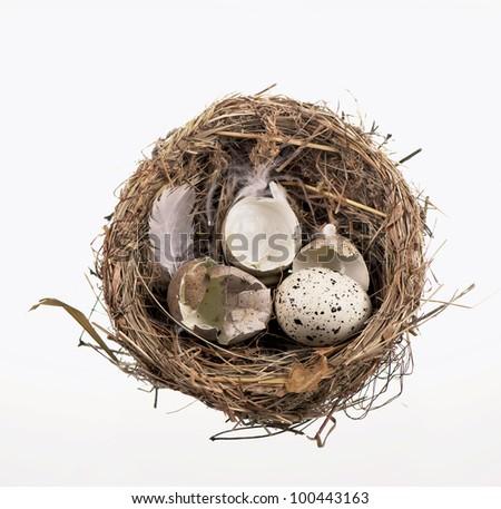 broken egg shells in nest  on white background - stock photo