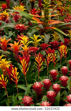 Bromelia. Flower background - stock photo