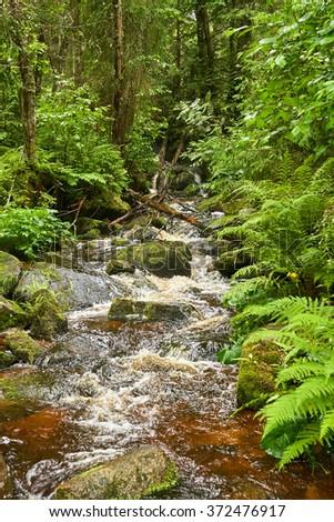 Brook, forest, Czech Republic, Europe - stock photo