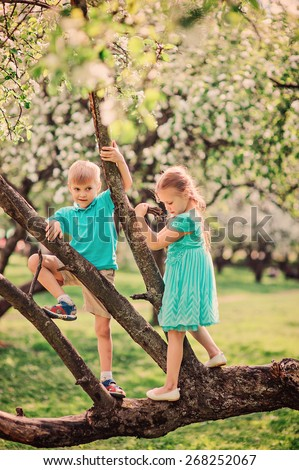 brother and sister playing and climbing tree in spring apple garden - stock photo