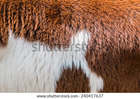 Brow and white Cow fur texture - stock photo