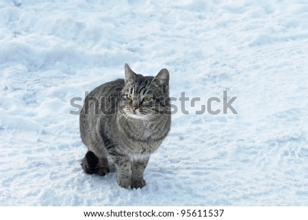 Brown a rabbit on snow - stock photo