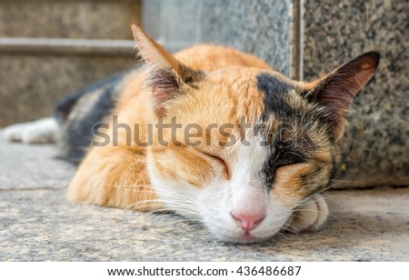 Brown and black color cat sleep on outdoor floor, selective focus on its eye - stock photo