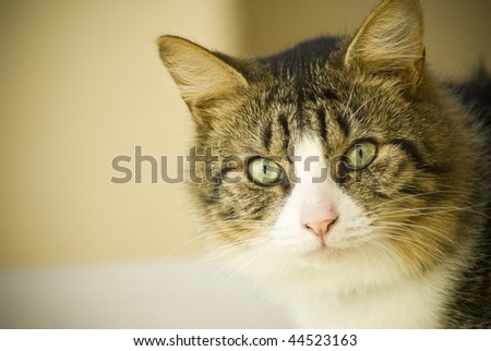 Brown and white cat looking at camera, filling right  part of screen - stock photo