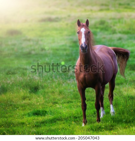 brown and white horse on a green meadow  - stock photo