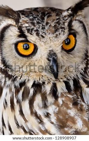 Brown and white owl, one of several existing species - stock photo