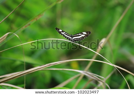 Brown and white spotted butterfly resting on cane - stock photo
