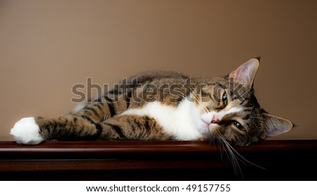 Brown and white tabby cat rests on table top with plain beige background. - stock photo