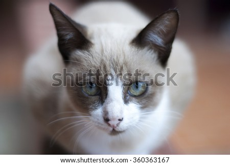 Brown and white young cat - stock photo