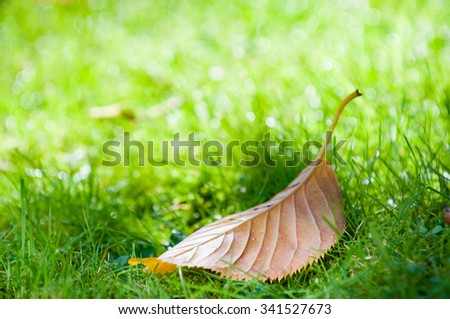 Brown Autumn leaf fallen from the tree - stock photo