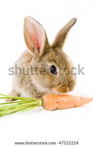 Brown baby bunny and a carrot, isolated on white background - stock photo