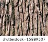 Brown bark - stock photo