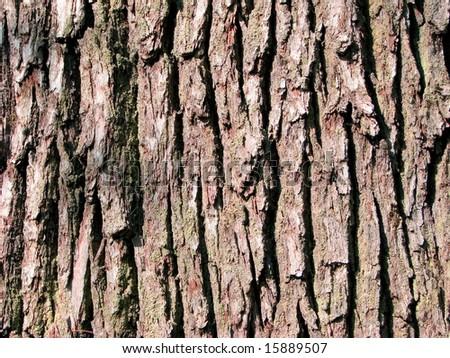 Brown bark - stock photo