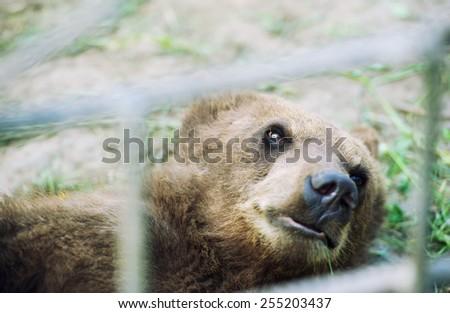 Brown bear - stock photo