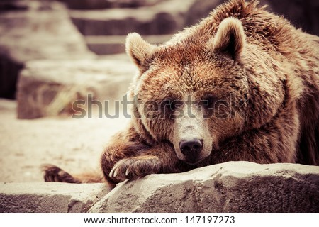 Brown bear in a funny pose - stock photo