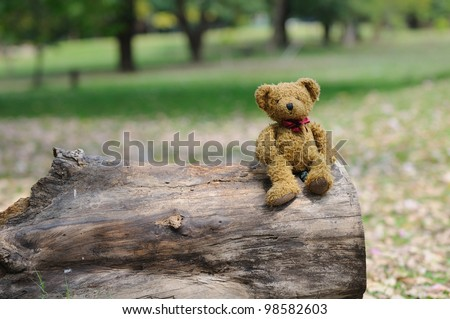 Brown bear in the park. - stock photo