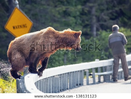 brown bear near unsuspecting man - stock photo
