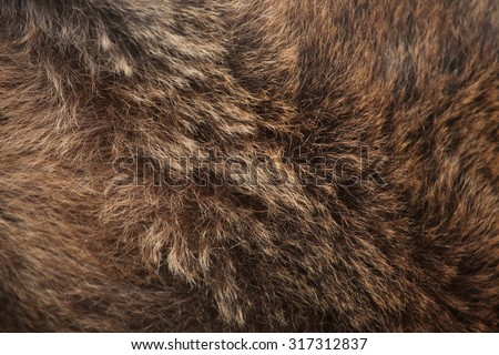Brown bear (Ursus arctos) fur texture. Wild life animal.  - stock photo