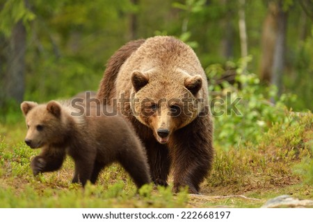 Brown bear with cub in forest - stock photo