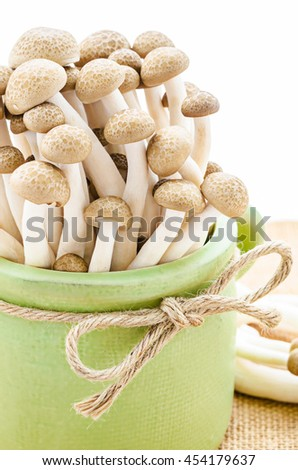brown beech mushrooms (Hypsizygus marmoreus) - stock photo