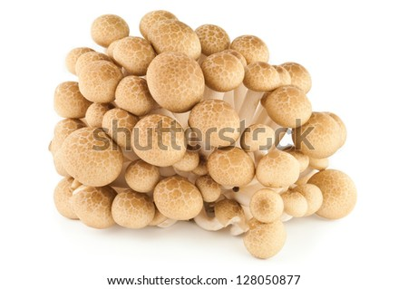 Brown beech mushrooms or Shimeji mushrooms isolated on white background - stock photo