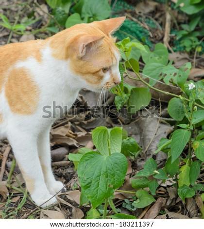 Brown cat in the garden - stock photo