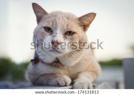 Brown cat sitting on the wall and looking to camera. Animal portrait. - stock photo