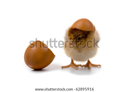Brown chickens isolated on a white background - stock photo
