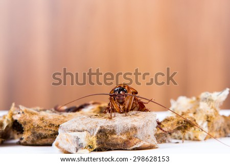 Brown Cockroach on spoiled food - stock photo