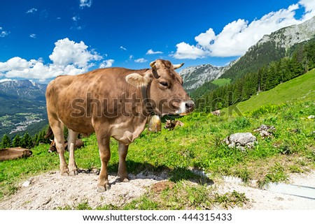 brown cow in front of mountain landscape - stock photo