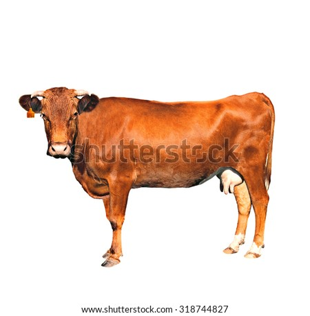 brown cow of c number isolated on a white background - stock photo