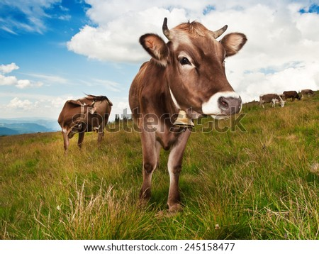 brown cow on the grass - stock photo