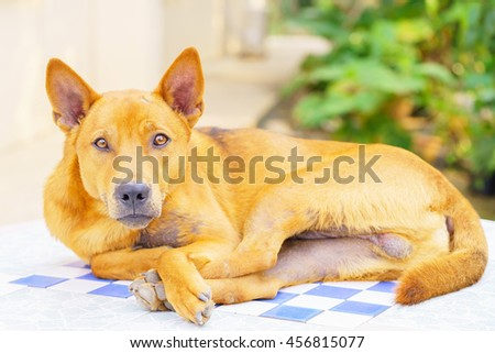 brown dog sleep ,select focus with shallow depth of field. - stock photo