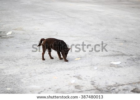 Brown dog with breakfast. Dog in front of a bowl full of feed. Tasty food for dogs. School of good manners - stock photo