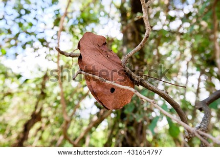Brown dry autumn leaves remains on branches of beech tree - stock photo