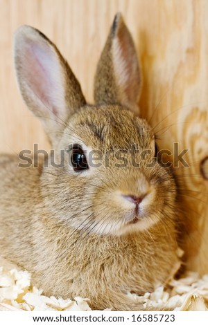 brown dwarf baby rabbits - photo #11