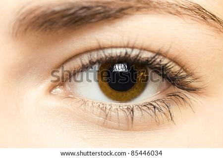 brown eye - stock photo